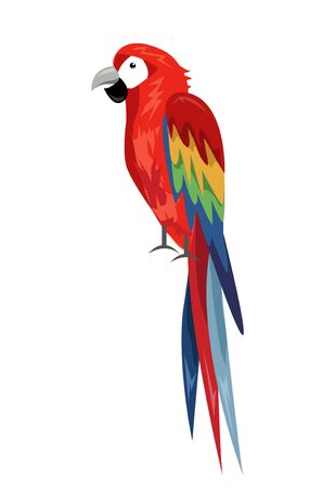Colored parrot ,cartoon bird design
