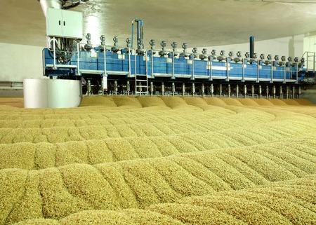Die industrielle Produktion von Malz. Ein riesiger Bottich von Malz. Keimung von Weizen. Die Trocknung Hafer. Gerste Sprossen. Standard-Bild