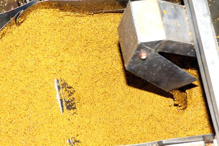 Mustard Powder Factory Making mustard mass from mustard seeds. Innovative equipment for the industrial production.