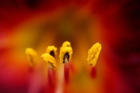 Red Flower Marco Imagens