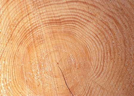wooden cut texture photo
