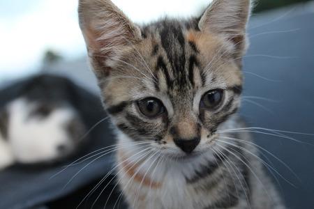 starring: Cat  starring at camera Stock Photo