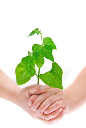 Childs hands holding a growing small plant, isolated on white background photo