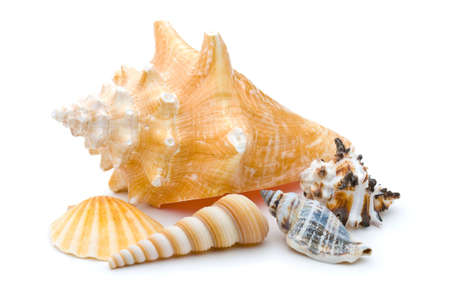 marine crustaceans: Collection of several weathered seashells, spiral, scallop, conch, over white background Stock Photo