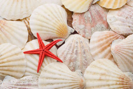 marine crustaceans: Bright red starfish seastar over background of weathered sea shells