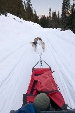 personal perspective: Dog sledding from drivers personal perspective, motion blur caused by speed