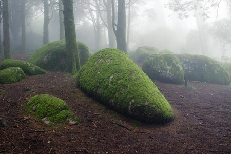 Rocks covered with moss in a Forest covered by mist