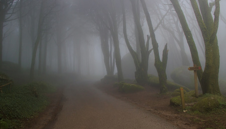 Road in a Magic forest with mist Stock Photo