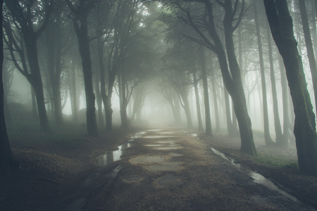Mysterious dark old forest with fog in the Sintra mountains in Portugal Stock Photo