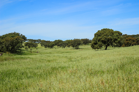 Agricultural fields with Cork oaks in Alentejo Portugal