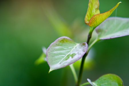 Closeup Of Green Flower Leaves Stock Photo - 5017474