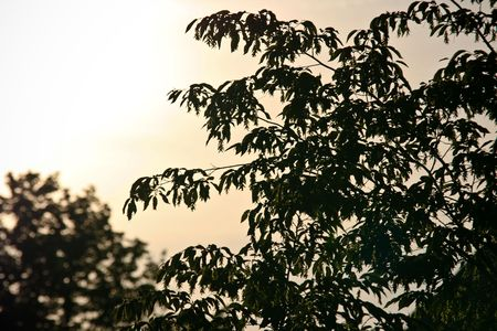 Closeup Of Green Tree Branches In Low Light Stock Photo - 5017477