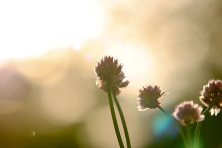 Closeup Of Wild Flowers In Light Rays Stock Photo - 5017478