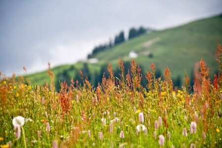 Closeup Of Panoramic Flowers And Grass Field Landscape Stock Photo - 5034335