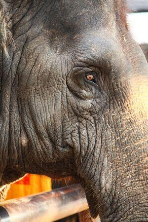 Closeup Photo Of An Elephants Head At The Zoo