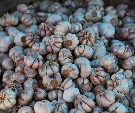 Ripe Garlic Stock On The Market Ready For Sale