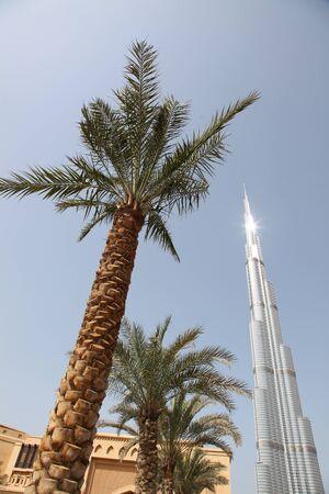 DUBAI, Vereinigte Arabische Emirate - 2112011: Palm Trees Ansicht mit Burj Dubai Skyscraper auf Hintergrund