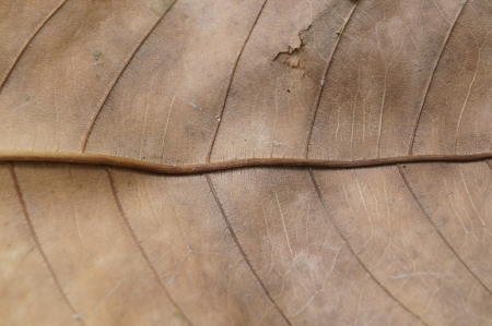 dejar secar en otoño