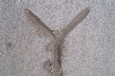 Y letter on beach              photo