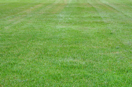 green grass for sport and filed photo