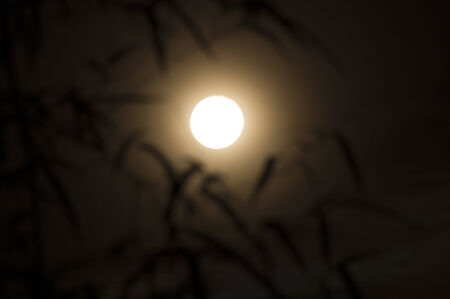 full moon with shadow of bamboo leave in dark in Songkran day, Thailand photo