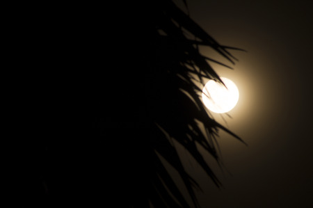 full moon with shadow of tree in dark in Songkran day, Thailand photo