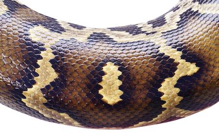 kin: kin of python snake Stock Photo