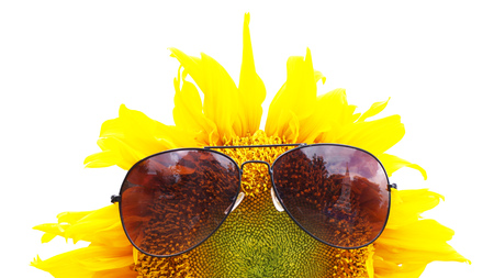 sunglassess: sunglassess on sunflower Stock Photo