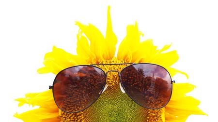sunglassess: sunglassess on sunflower Stock Photo