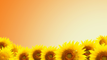 nature backgrounds: sunflower and orange  background Stock Photo