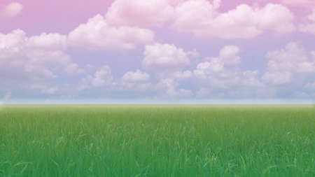 filed: rice filed and blue and violet blue sky