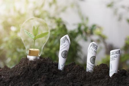 boom planten en groei op geld munt, gestapeld op gloeilamp met aarde en dollars, bankbiljetten. concept in sparen Werelddag herbebossing eco bio arbor CSR ESG ecosystemen herbebossing concept
