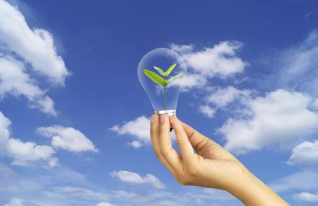 하늘, 저장 개념에 작은 나무와 손을 잡고 전구 세계 환경 하루 reforesting 에코 바이오 아 버 CSR ESG 생태계 재조림 컨셉