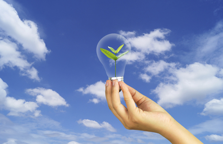 hand holding bulb with small tree in sky, concept in save World environment day reforesting eco bio arbor CSR ESG ecosystems reforestation concept