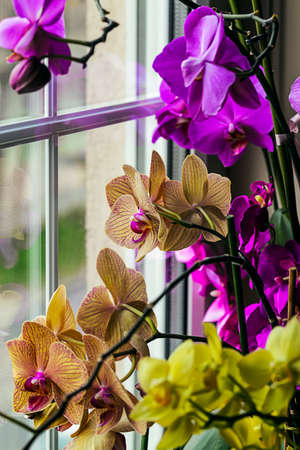 Orchid by a window photo