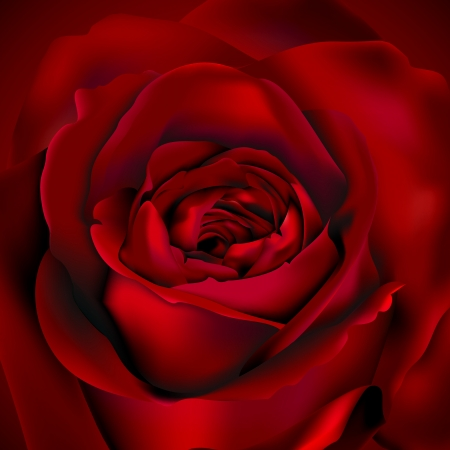 Red Rose background