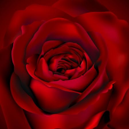 Red Rose fondo