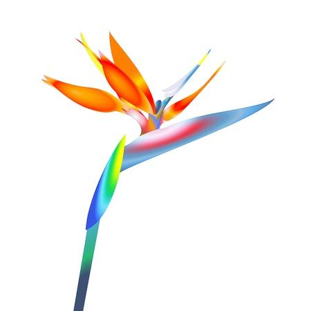 bird of paradise flower Vectores