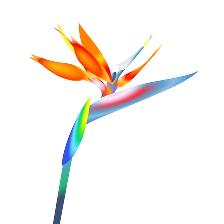 bird of paradise: bird of paradise flower Illustration