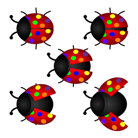 colorful set of Ladybird Vector