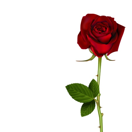 Red Rose Vectores