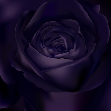 Black rose background Illustration