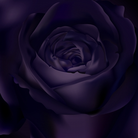 centifolia:  Black rose background Illustration