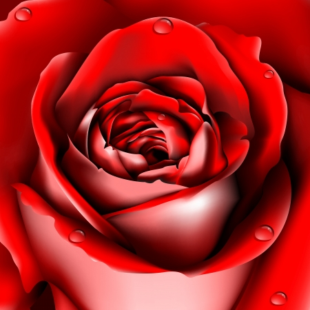 centifolia: Red Rose background