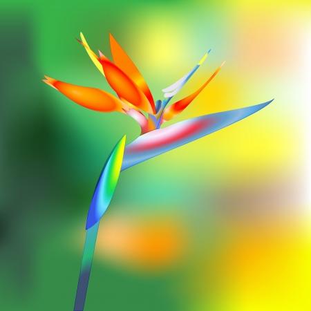 bird of paradise: ave del para?so de las flores