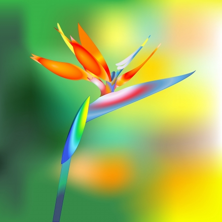tropical bird: bird of paradise flower Stock Photo