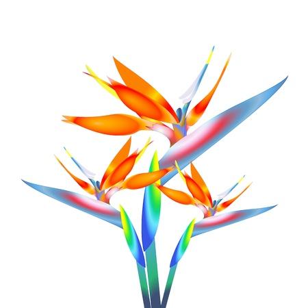 bird of paradise: bird of paradise flower Stock Photo