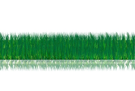 Grass with flowers,  Isolated over background and groups, vector illustration Vector