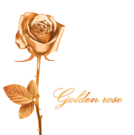 freshens: Golden rose, vector