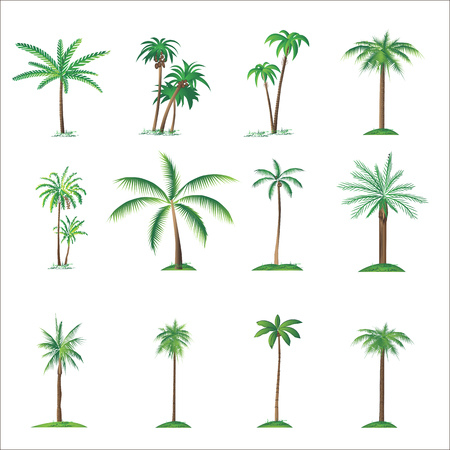 grunge leaf: set of palm tree
